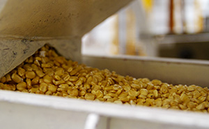 Adams Group bcFood ERP case study - corn