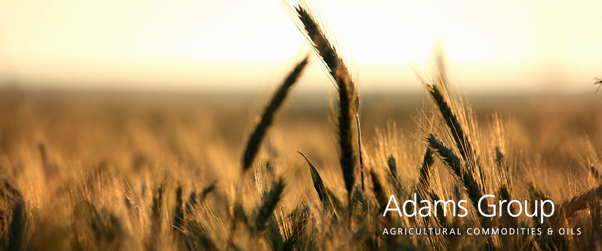 Adams Group bcFood ERP case study