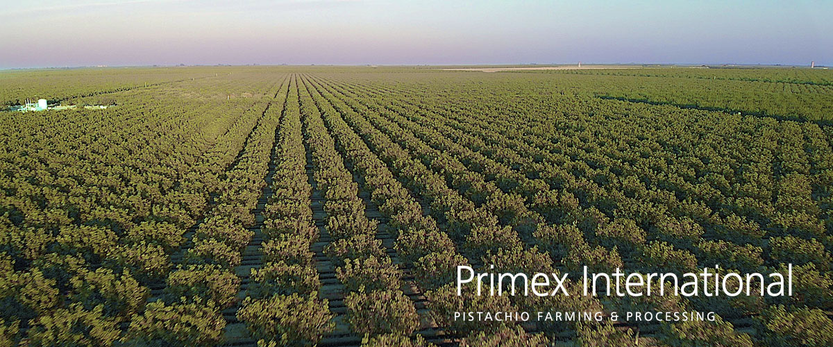 Primex International bcFood ERP case study